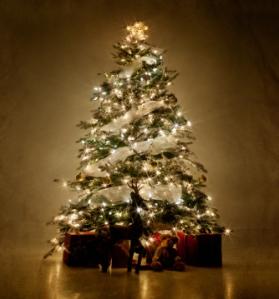 iStock_000018432315XSmall_Xmas Tree